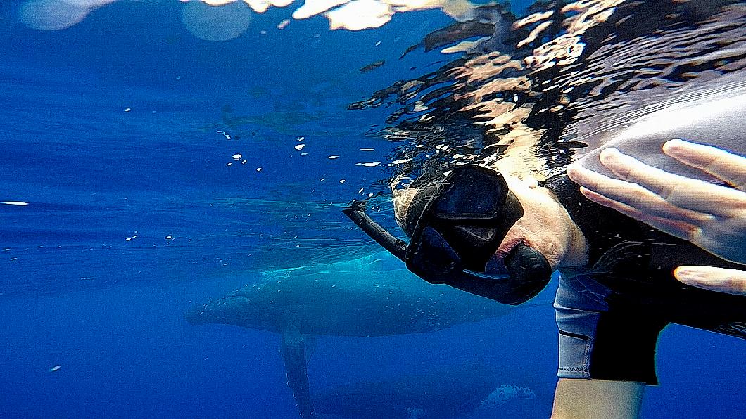 whale-selfie-2